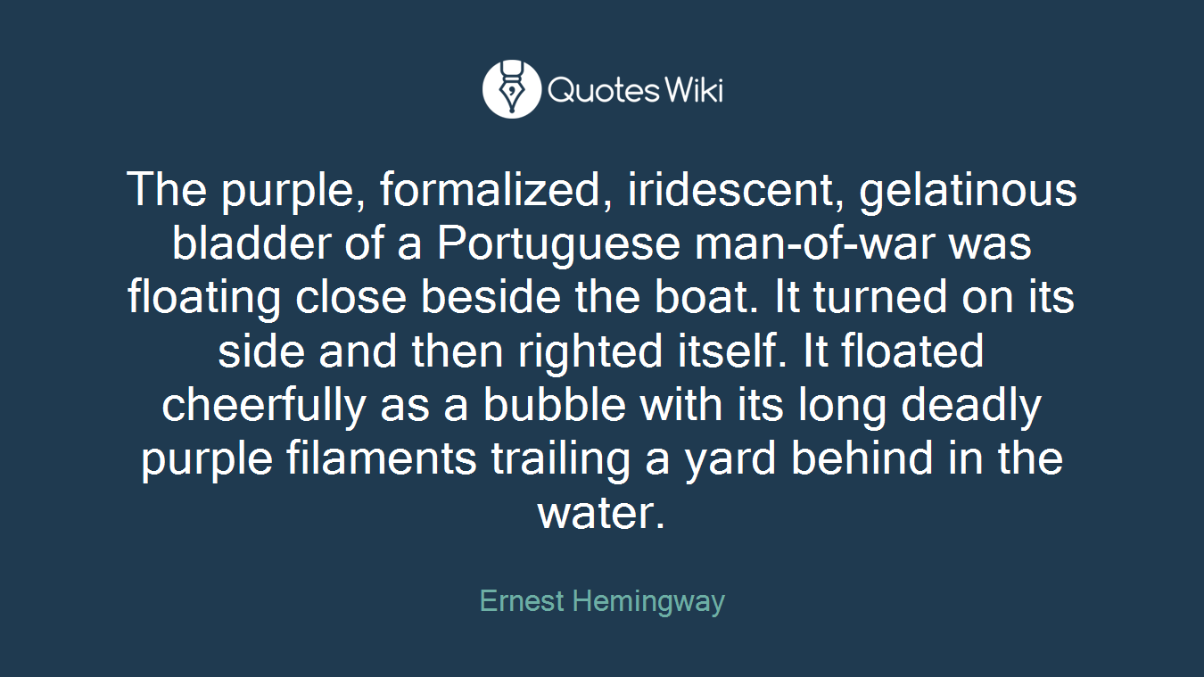 The purple, formalized, iridescent, gelatinous bladder of a Portuguese man-of-war was floating close beside the boat. It turned on its side and then righted itself. It floated cheerfully as a bubble with its long deadly purple filaments trailing a yard behind in the water.