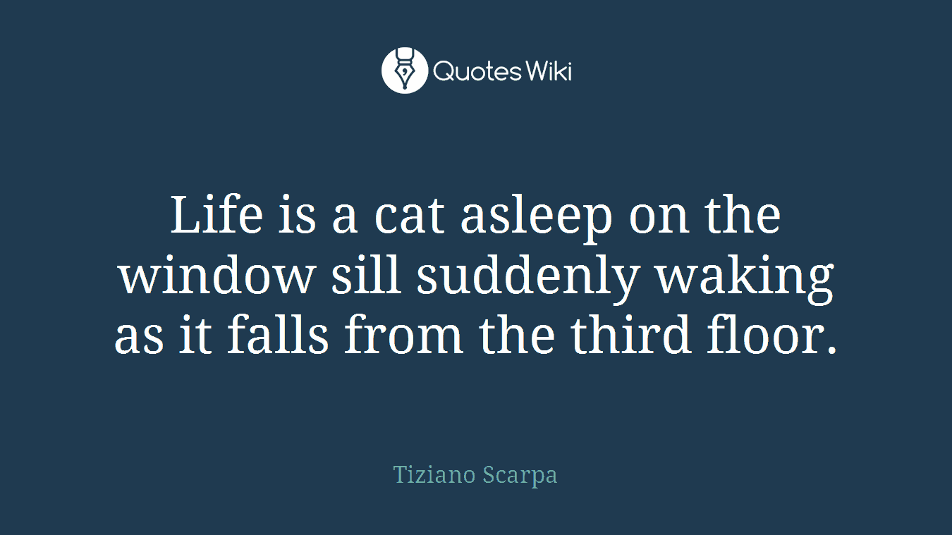 Life is a cat asleep on the window sill suddenly waking as it falls from the third floor.